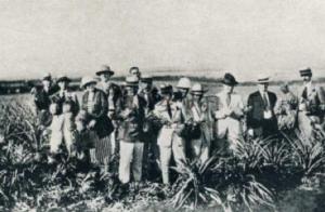 delegation in pineapple fields