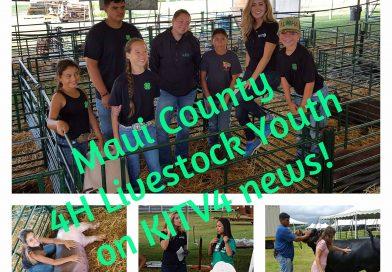State Livestock Show