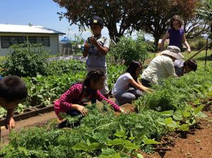 Youht in the garden participating in Junior Master Gardener activity