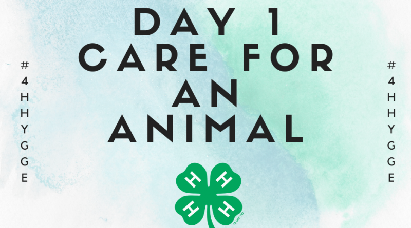 Hygge Day 1 Care for An Animal