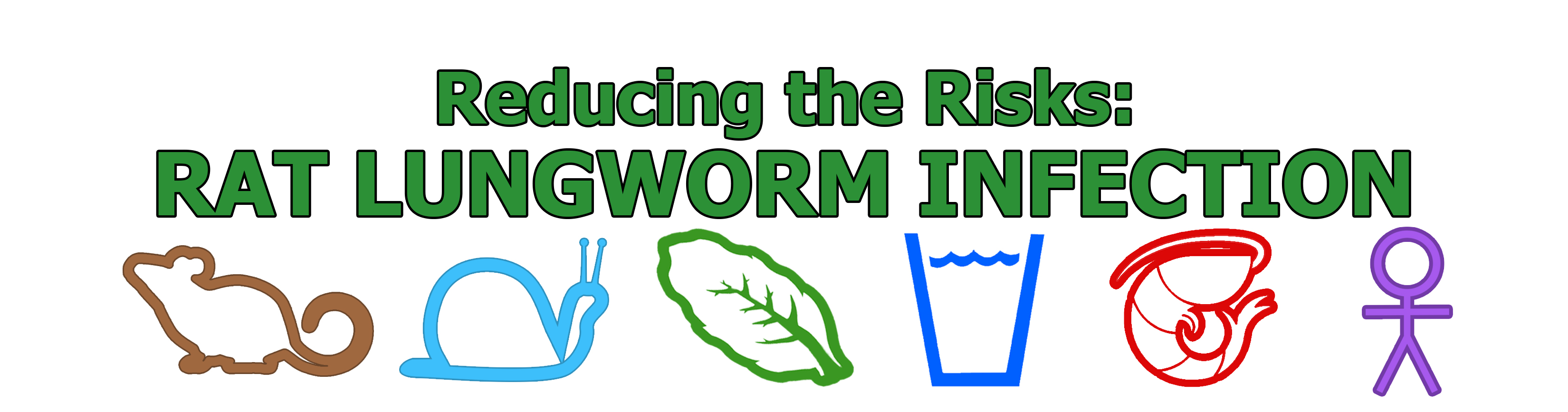 rat lungworm infection