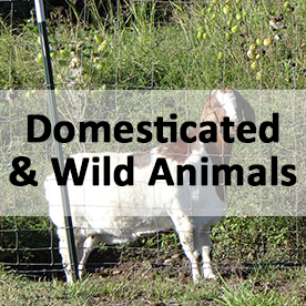 Domesticated and Wild Animals