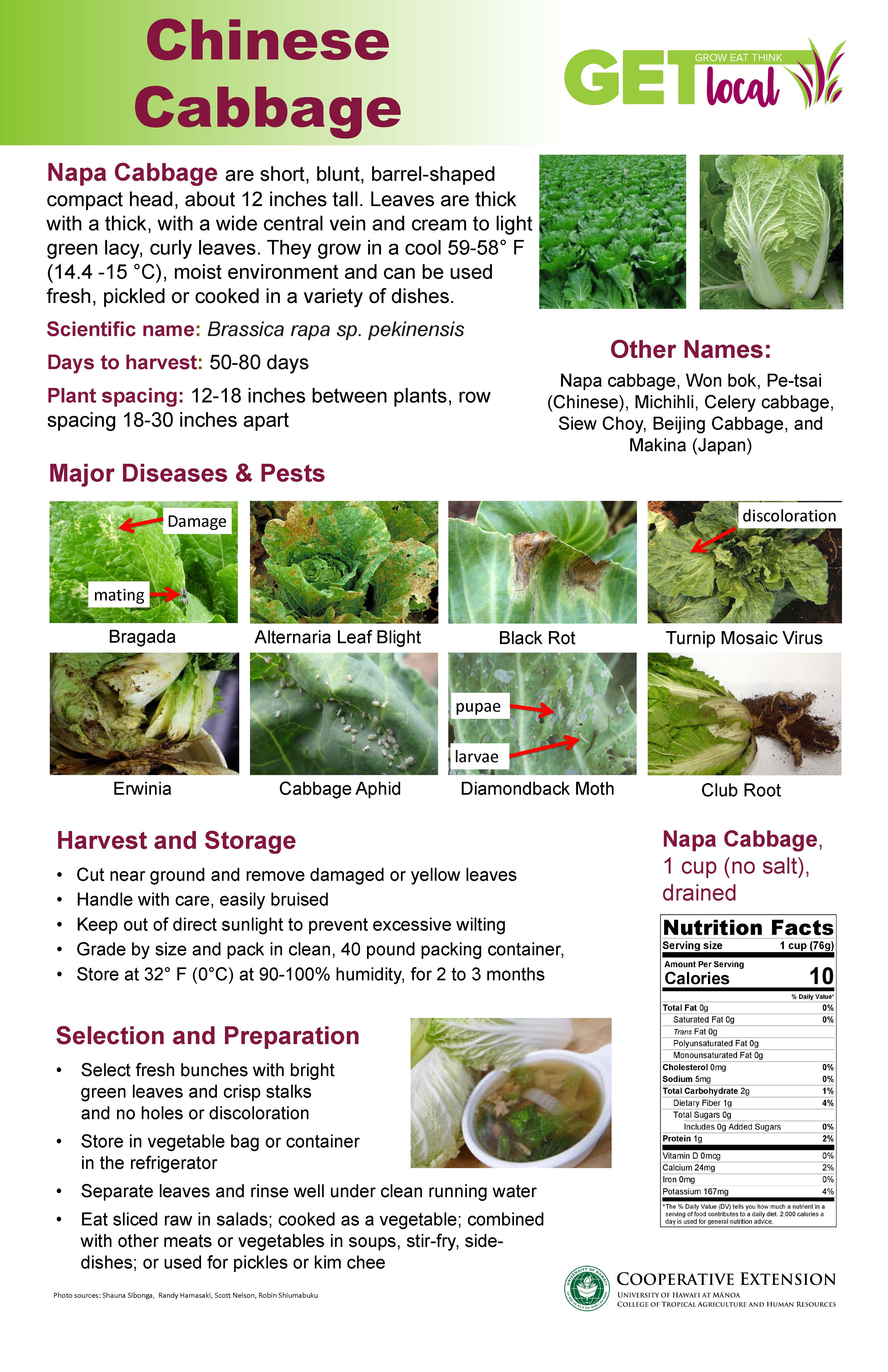 Chinese Cabbage Poster