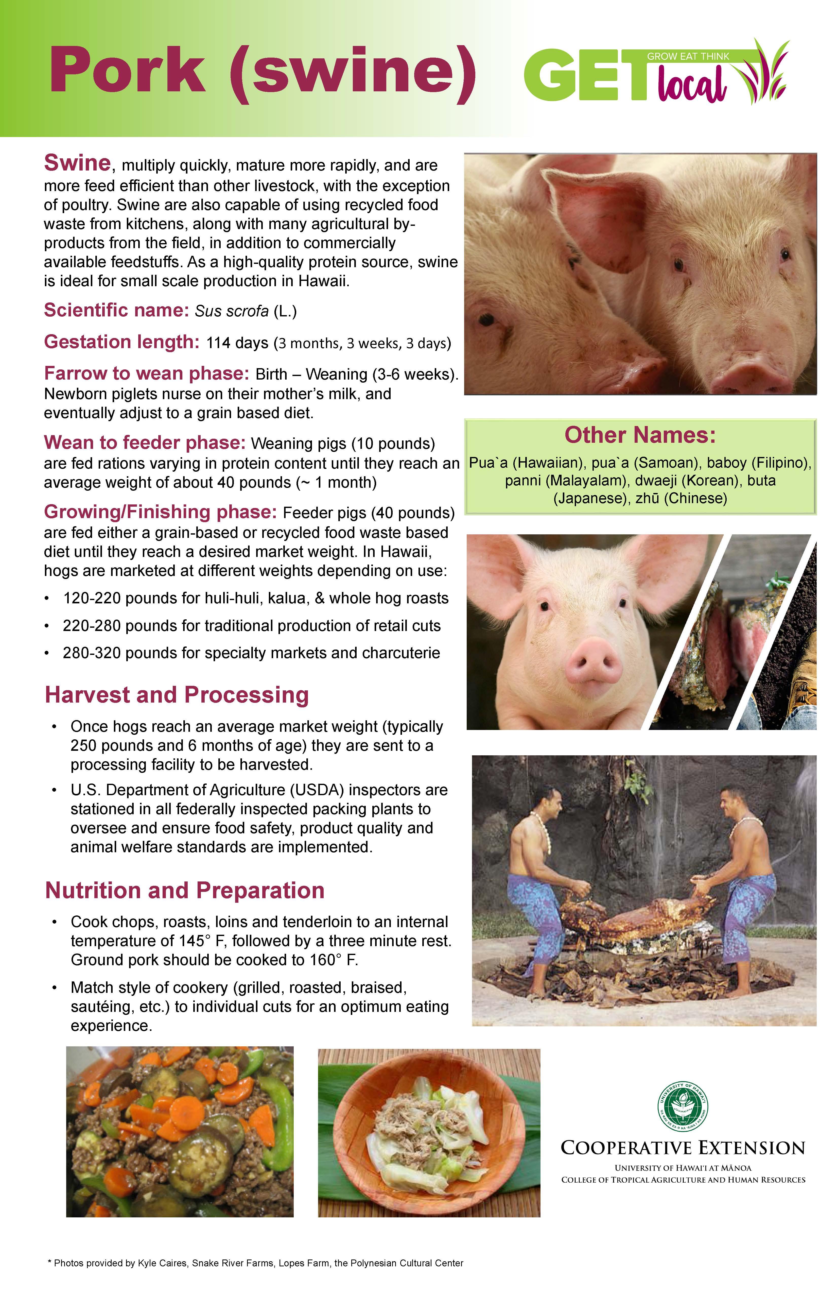 Pork Poster