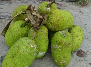 Second Breadfruit