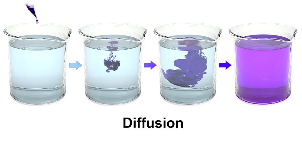 <p><strong>Fig. 2.9.</strong> Concentration gradient leading to diffusion and dynamic equilibrium</p>