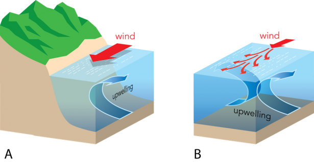 <p><strong>Fig. 3.23.</strong> The processes of upwelling. The combination of prevailing winds and Ekman transport moves water away from an area. Cool, nutrient-rich bottom water replaces it. (<strong>A</strong>) coastal upwelling and (<strong>B</strong>) equatorial upwelling in the Northern Hemisphere.</p><br />