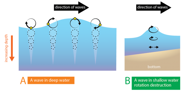 <p><strong>Fig. 4.18.</strong> (<strong>A</strong>) If a small buoy (black circle) was on the surface of the water, it would move in a circular motion, returning to its original location due to the orbital motion of waves in deep water. (<strong>B</strong>) As deep-water waves approach shore and become shallow-water waves, circular motion is distorted as interaction with the bottom occurs.</p><br />