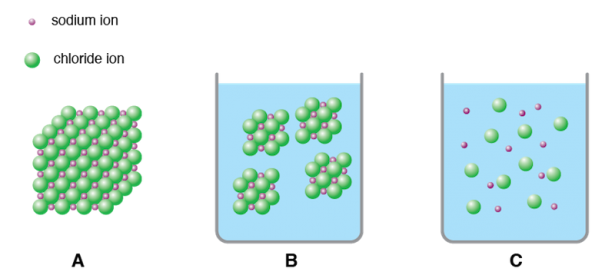 <p><strong>Fig 2.33.</strong> Dissolution and dissociation of sodium chloride. Sodium and chloride ions in (<strong>A</strong>) a large crystal, (<strong>B</strong>) dissolved in water as smaller crystals, and (<strong>C</strong>) dissociated in water.</p><br />