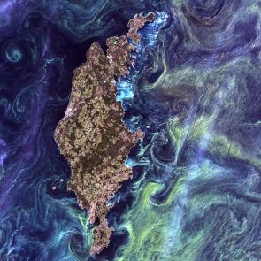 <p><strong>Fig. 2.3.</strong> (<strong>B</strong>) A bloom of microscopic phytoplankton near Gotland, Sweden as seen from space</p><br />
