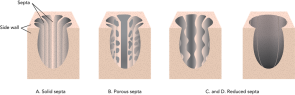 <p><strong>Fig. 3.34.</strong> Septa variations in colonial corals (shown with part of side walls removed)</p><br />
