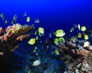 <p><strong>Fig. 4.3.</strong> Fishes—when more than one species is present, the word <em>fishes </em>is used.</p><br />
