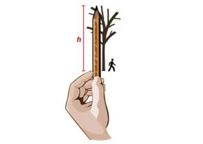 <p><strong>Fig. 5.55.</strong>&nbsp;(<strong>A</strong>) Hold the pencil vertically with the sharpened tip aligned with the treetop.</p><br />