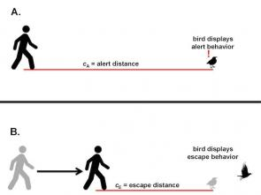 <p><strong>Fig. 5.56.</strong> Alert and escape distances for a bird on the ground</p><br />