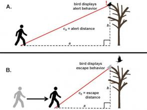 <p><strong>Fig. 5.57.</strong> Alert and escape distances for a bird roosting in a tree</p><br />
