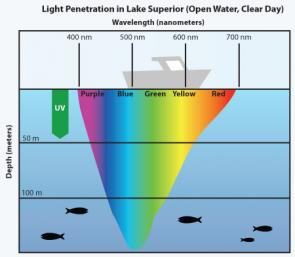 <p><strong>Fig. 9.7.</strong> Visible colors of light penetrate differently into the ocean depths, as seen in this image depicting light penetration in Lake Superior. Longer wavelengths such as red are absorbed at a shallower depth than shorter wavelengths such as blue, which penetrates to a deeper depth.</p><br />