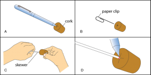 <p><strong>Fig. 2.16.</strong> Make the scale-and-cork assembly by (<strong>A</strong>) marking the center of the cork (<strong>B</strong>) starting a hole in the cork with a paper clip (<strong>C</strong>) inserting the skewer into the cork and (<strong>D</strong>) darkening the mark at which the skewer meets the cork.</p><br />