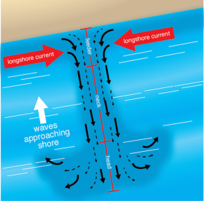 <p><strong>Fig. 5.19.</strong> Anatomy of a rip current, showing how currents parallel to shore intersect with the rip current heading out to sea</p><br />