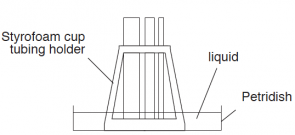 <p><strong>Fig. 3.9.</strong> Styrofoam holder for capillary tubes. For accurate comparisons, make sure that the tubes all stay vertical and at the same water depth while in the holder.</p>