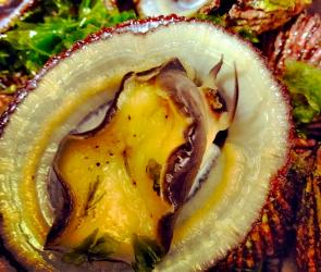 <p><strong>SF Fig. 3.5.</strong>&nbsp;(<strong>B</strong>) Underside of yellow-foot limpet (<em>Cellana sandwicensis</em>), known in Hawaiʻi as&nbsp;<em>ʻ</em><em>opihi ʻālinalina</em></p><br />