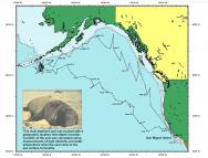 <p><strong>Fig. 6.22.</strong> (<strong>A</strong>) Map illustrating the movements of a male northern elephant seal (<em>Mirounga </em><em>angustirostris</em>) wearing a time-depth recorder</p><br />