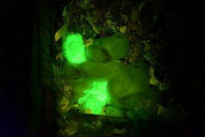 Green baby rabbits