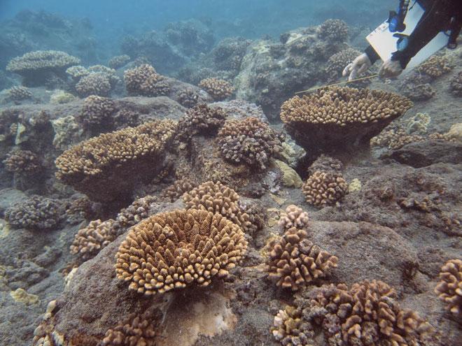 Rare coral colonies