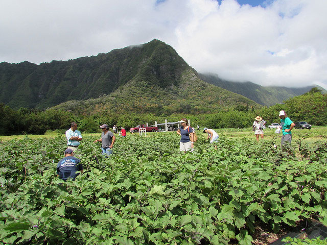 Waimanalo Research Station Open House