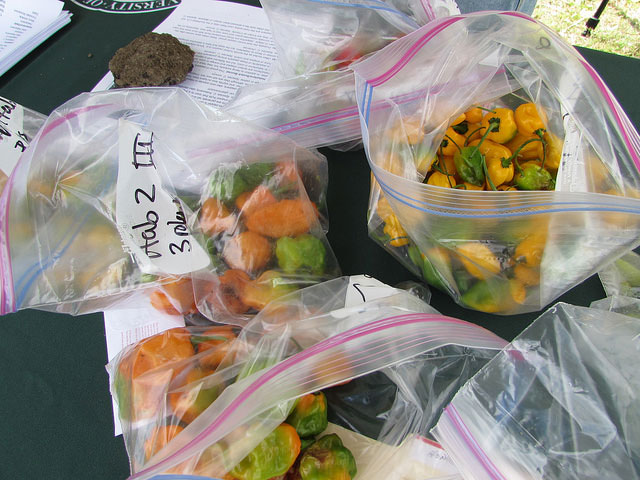 Hot peppers at Waimanalo Research Station Open House