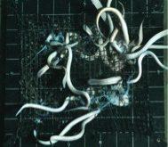 Jellyfish baits in the deep sea
