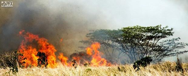 Non-native grasses burn in central Oʻahu