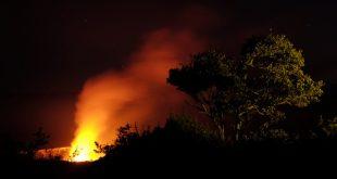 Seeding the future of the ʻōhiʻa tree