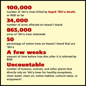 system-ohia-seed-facts