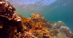 manoa-jabsom-coral