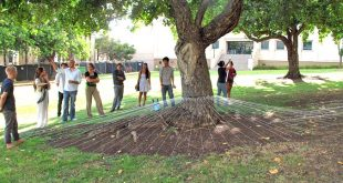 A site design exercise; students around a tree