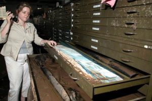 Sara McBride, looks through a tray of muddied China maps in the map room