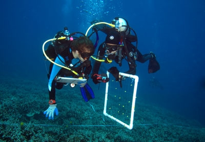 Two Scuba divers under water
