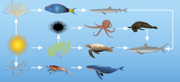 <p>Fig 4. A combination of different food chains make up a food web of a given ecosystem.</p>