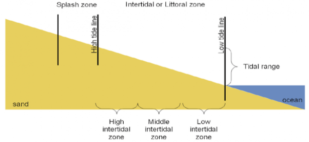 <p>Fig. 2. This diagram clearly depicts the areas on a coastal shoreline.&nbsp;</p><br />