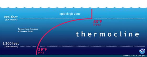 <p>Fig 4. In this seawater profile, the red line shows the temperature change, or thermocline, as depth increases. This profile may look different between seasons and locations.&nbsp;</p><br />