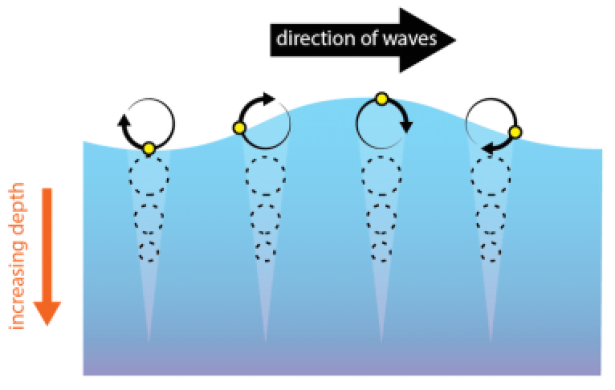 <p>Fig. 2.&nbsp;When energy in a wave passes through the water, water molecules move in a circular motion. Here, a small floating object (yellow circle) returns to its original location due to the orbital motion of waves in deep water.</p><br />