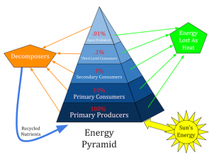 <p>Fig. 2. An energy pyramid shows that all energy in an ecosystem began as energy stored in plants from the sun.</p>