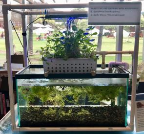 <p>Fig. 6. This simple aquaponics system is successful at cycling material between plants and animals.</p>