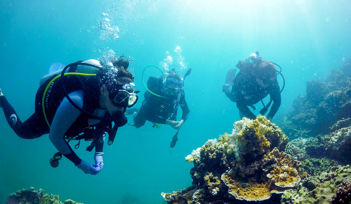 Hawaii Institute of Marine Biology scuba divers