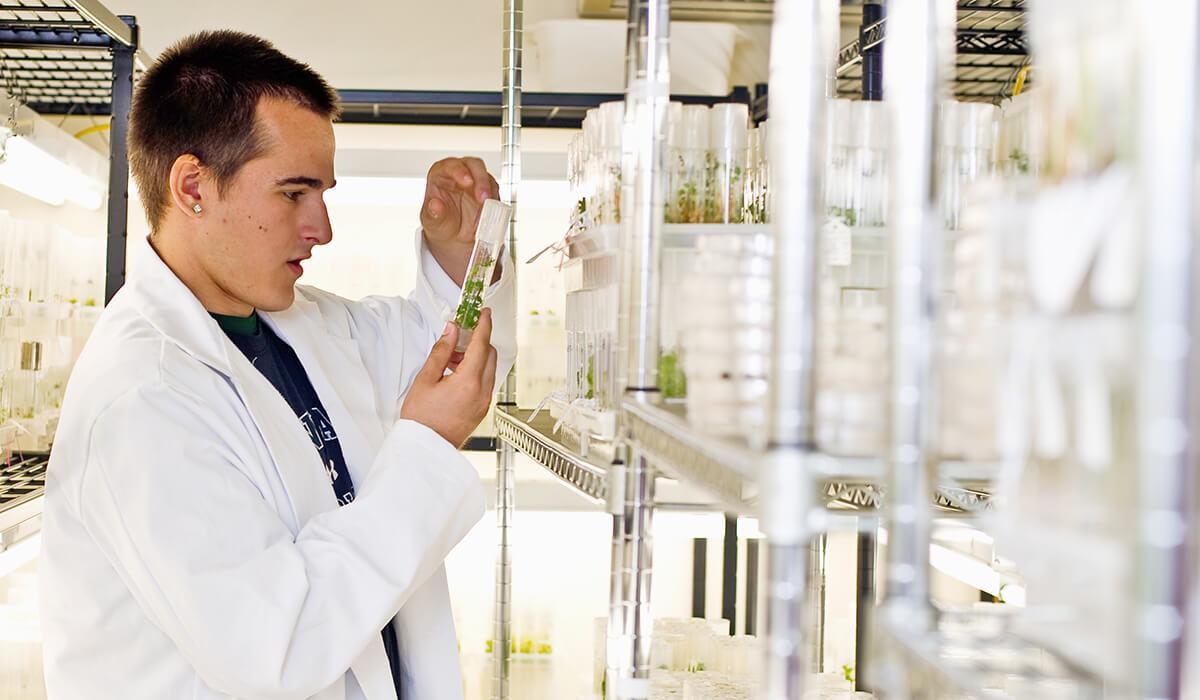 Lyon Arboretum researchers help to preserve rare plants