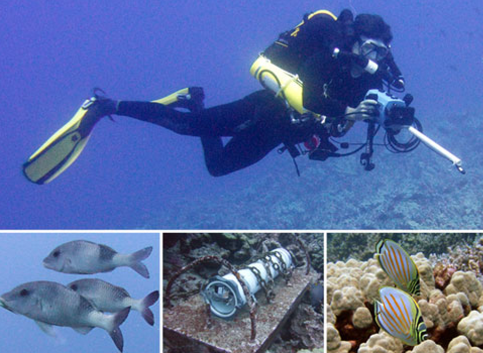 dr tricas and doctoral student kelly boyle rebreather diving and