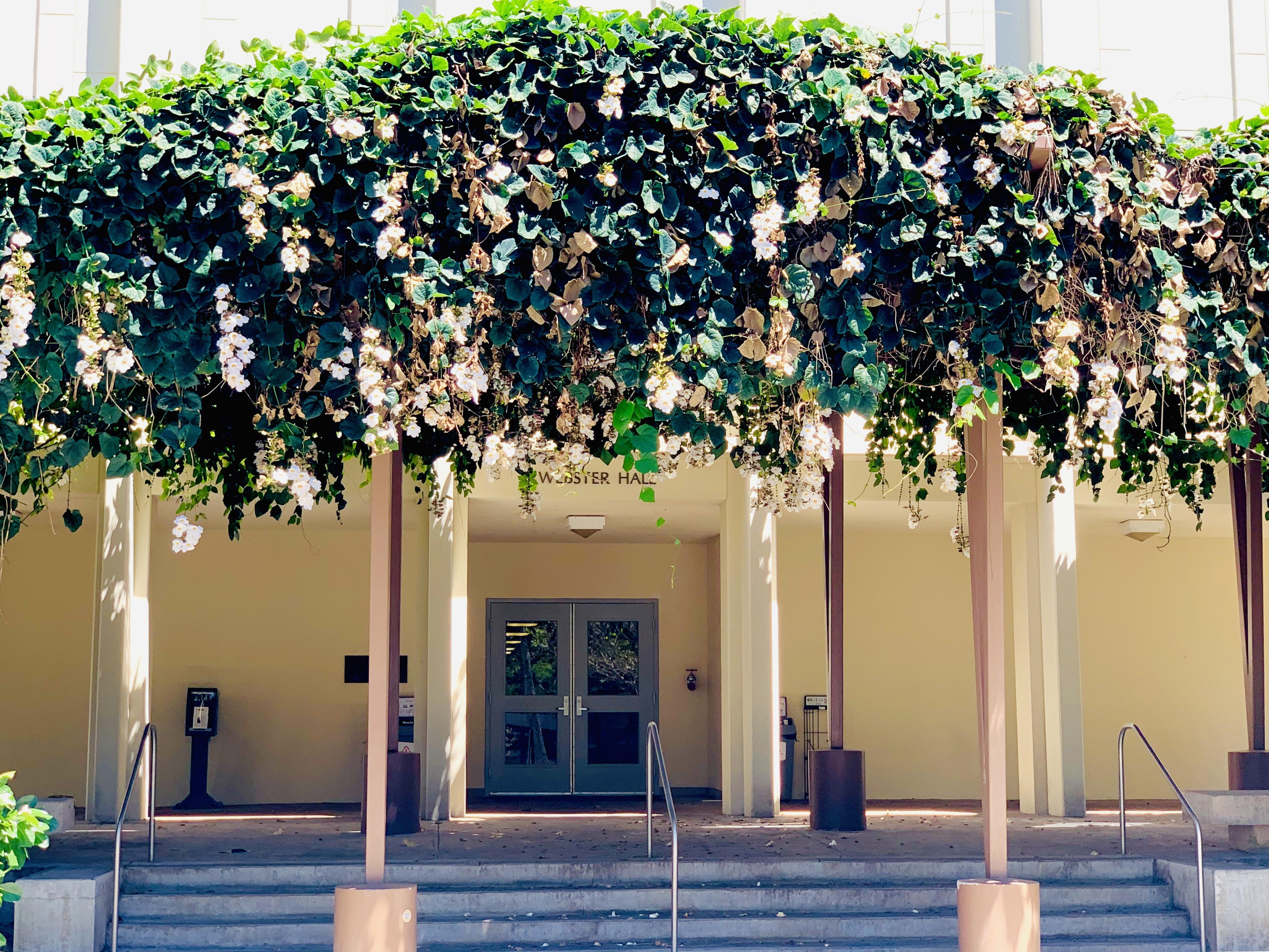 Vines at Webster Hall