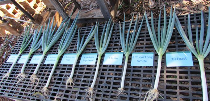 Negi Varieties on Grate