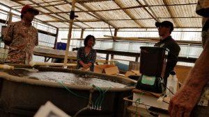 Fish and Poi Workshop Aquaponic Facilities