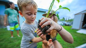 Keiki Agriculture Grows